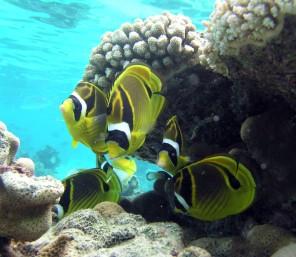 Pececillos under the sea